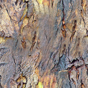 Bark  Seamless Texture