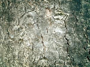 Bark_wood_texture