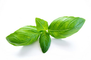 Basil Leaves On White