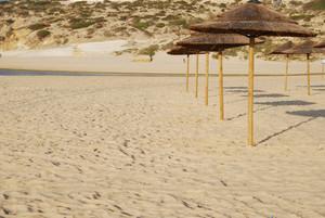 Beach Scene With Coconuts Area