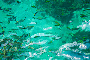 Beautiful blue sea and fish from South Thailand, Asia