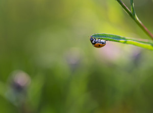 Beautiful close up of ladybug sitting on plant. Beautiful summertime macro