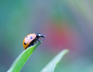 Beautiful close up of ladybug walking on plant