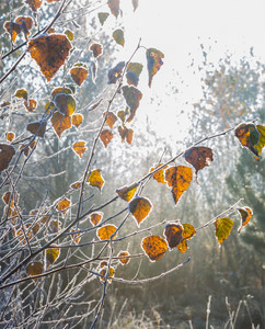 Beautiful frozen plants in morning light. Close up branches with frost. Nature background.