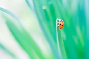 Beautiful ladybug sitting on springtime plant