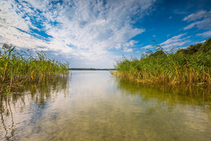 Beautiful lake shore with reeds. Lake near Olsztyn in Poland.