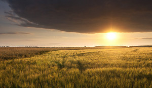 Beautiful landscape of grain field at sunset with spectacular sky