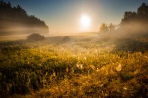 Beautiful landscape of meadow sunrise