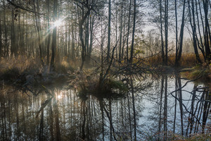 Beautiful landscape of sunrise on polish swamps. Wild landscape tranquil scene.