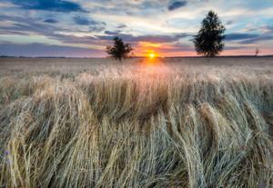 Beautiful landscape of sunset over field