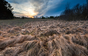 Beautiful landscape of withered grassland  near forest at sunset. Late autumn landscape.