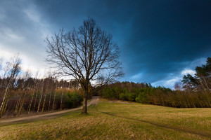 Beautiful landscape with dramatic sky over withered trees on field. Stormy majestic sky