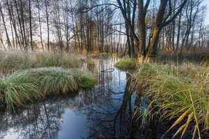 Beautiful morning landscape of wetlands. Wild rural landscape photographed on polish countryside.