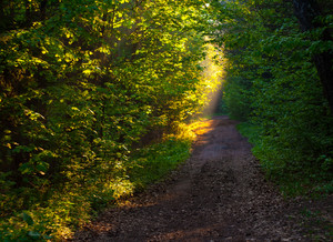 Beautiful path in forest in morning light