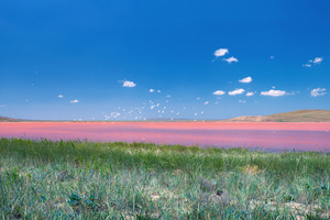 Beautiful pink mud lake