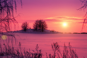 Beautiful pink sunset over snowy field with trees