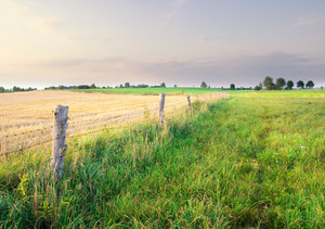 Beautiful polish meadow with fence in late spring