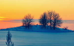 Beautiful red sunset over snowy field with trees