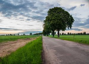 Beautiful rural landscape with asphalt road near fields
