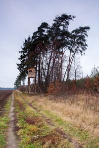 Beautiful sad autumnal forest landscape. Polish countryside