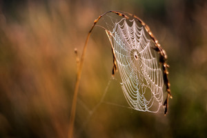 Beautiful spider web on grass in sunset light. natural background