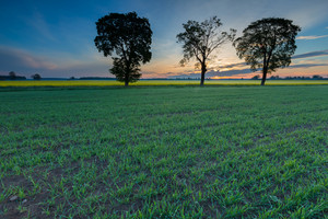 Beautiful springtime idyllic sunrise over young cereal field. Beautiful polish countryside.