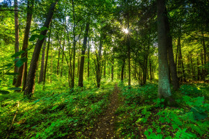 Beautiful summer wild forest landscape. Natural landscape of wild forest photographed at sunrise