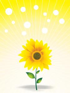 Beautiful Sunflower And Fog