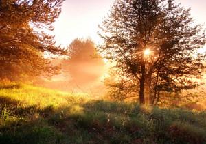 Beautiful sunrise in springtime forest