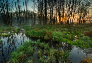 Beautiful sunrise over foggy wetlands. Wild polish landscape.
