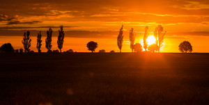Beautiful vibrant sunset over field. Close up of cloudy sky sunet and trees silhouettes.