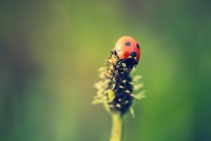 Beautiful vintage photo of ladybug sitting on plant. Nature background with vintage mood effect