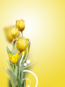 Beautiful Yellow Tulips Background