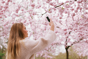 Beautiful young female taking pictures of pink blossom flowers at a spring blossom park. Beautiful caucasian woman shooting flowers with her mobile phone.