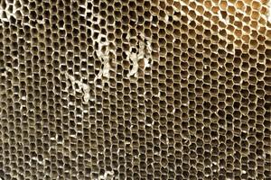 Bee Comb Grunge Texture