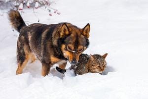 Big dog and cat playing in snow