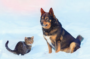 Big dog and little kitten sitting together in the snow