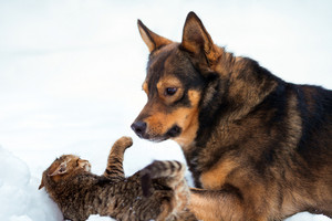Big dog playing with kitten on the snow