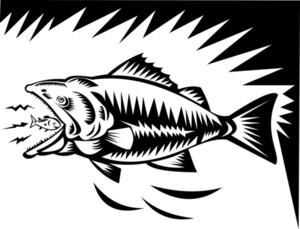 Big Fish Eating A Small Fish