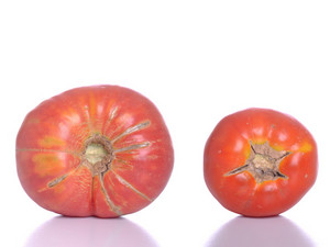 Biological Tomatoes