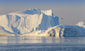 Bird flying over a sunlit iceberg