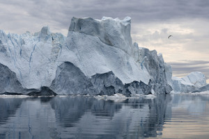 Bird flying over an iceberg reflected in icy waters under a grey sky