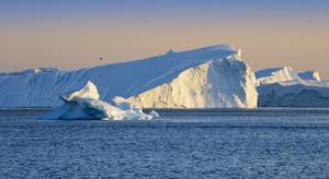 Bird flying over sunlit icebergs at dawn