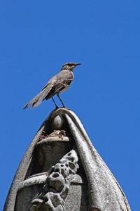Bird On Cemetery