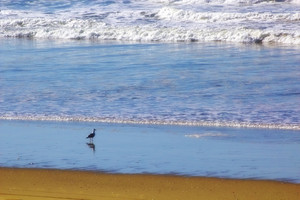 Bird On Ocean Beach
