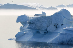 Bird perched on a sunlit iceberg on a foggy day