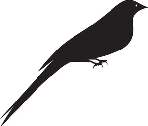 Bird Vector Element