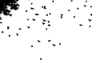 Birds 2 Vector