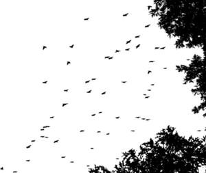 Birds 3 Vector