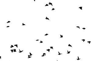 Birds 7 Vector